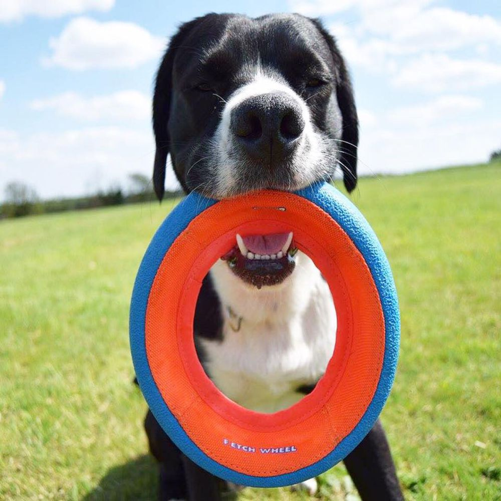 Chuckit! Fetch Wheel Small image