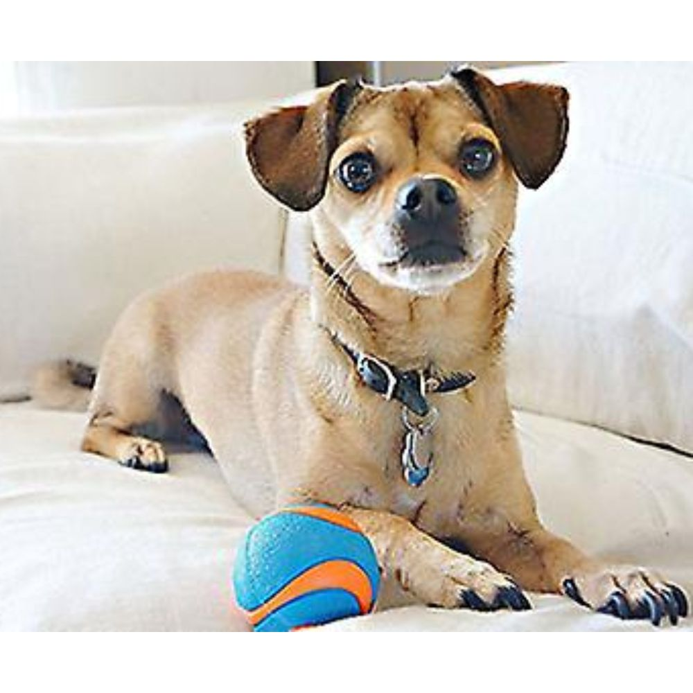 Chuckit! Ultra Squeaker Ball 1 Pack Small image