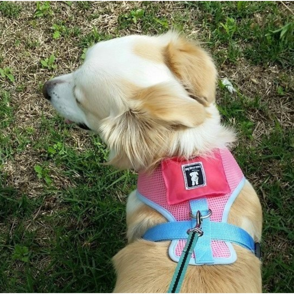 Comfy Dog Harness Pink with Blue Trim (Large) image