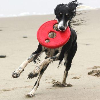 Rogz RFO Frisbee Fetch Dog Toy
