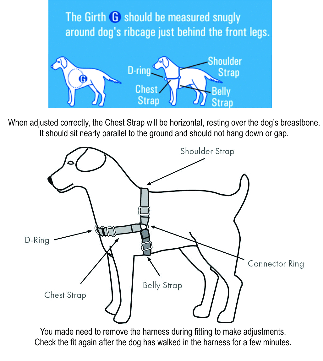 Gentle Leader easy walk harness fitting description
