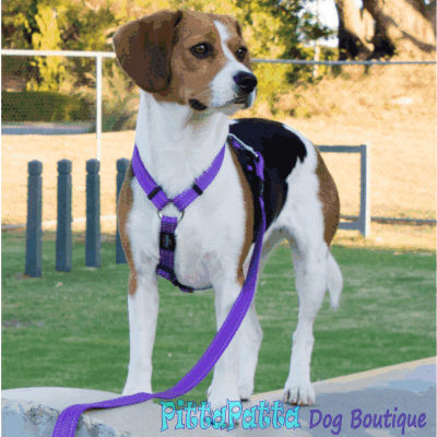 Rogz Utility Purple Harness